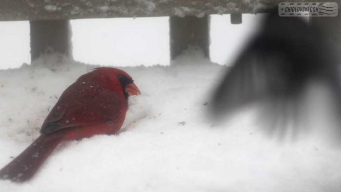 birds-noreaster-b001