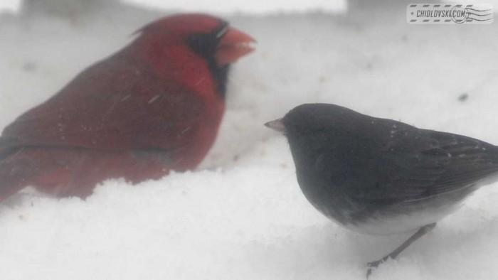 birds-noreaster-b002