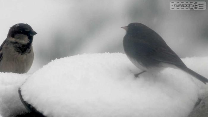 birds-noreaster-b003