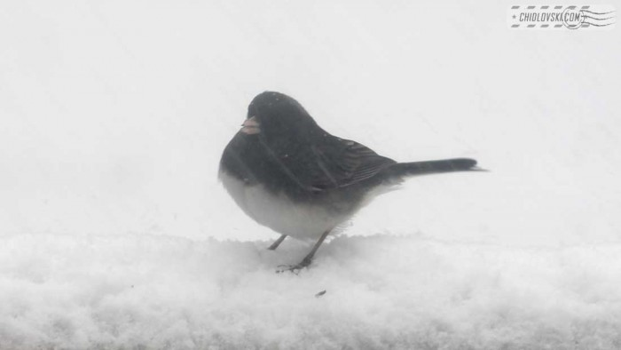 birds-noreaster-b006