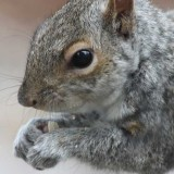 squirrel-b804