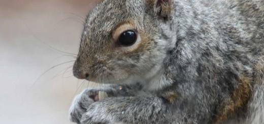 squirrel-b804