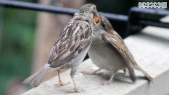 sparrows-b801